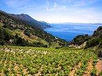 Vineyards Dingac (under UNESCO heritage), 1 hour away