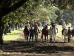 How about horseriding at the Centennial Parklands 5 mins further down the Moore Park Golf Course?