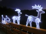 These reindeer are waiting to pull Santa's sleigh. :-)