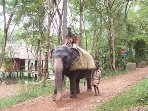 Elephant care centre Kappukadu in 6 km