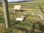We are lucky enough to see the lambs close up in the field at the back of the cottage.