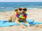 Your pets will love the beach just mins from the cottage