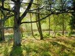 Woods at Dun Aluinn
