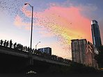 While in Austin, see the Congress Ave evening Bat exodus.