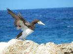 Cayman Brac: A birding paridise