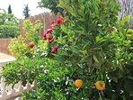 Flower and fruit gardens