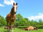 Paqua, le plus espiègle de nos 4 chevaux