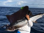 Fishing on Marco Island is Good Any Time of the Year.  Fish from the Beach or Take a Chartered Boat.