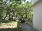 Garden with carob trees