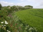 The fields are surrounded by hedgerows and an abundance of wild flowers