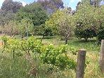 Abundant orchard