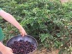 Plentiful berries in season