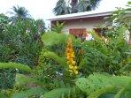 Votre logement dans le jardin fleuri