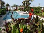 Grande piscine de 16 m profondeur 140/190 avec plage aménagée entourée de fleurs