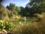 The pond and water feature