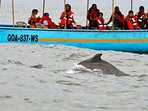 Dolphin sightseeing trip