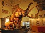 Museo Scienze