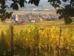 Le village de Saint Hippolyte entouré de son vignoble.