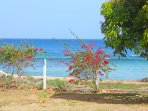 Closeup of seaview from front yard