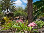 Frangipani, coconut palm, bananas - there are many tropical species.
