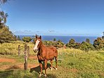 With 40+ private acres of pastureland, you'll enjoy the best of 'Old Hawaii.'