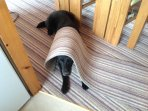 Well behaved pet allowed - no need to hide under the rug