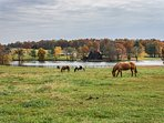 Grazing horses only enhance the property's peaceful nature.