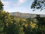 Beautiful Cove Mountain!