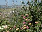 Springtime in Paros, flowers everywhere