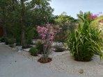 Jardin exotique.