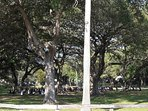 You can do Yoga on the Park under beautiful Oak Trees.