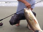 Great surf fishing-