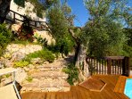 Path down to pool with rock garden, olive tree shower, sun loungers and pool.