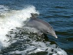 Sometimes we get to see dolphins in our waters.