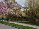 A deux pas : la promenade Lachenal qui permet de rejoindre la vieille ville et le lac