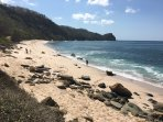 Escondida's is a  nesting spot for critically endangered Hawksbill and Green Sea Turtles.