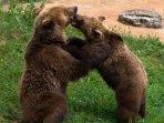 le parc animalier de Gramat à 10 min