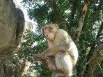 la forêt des singes à Rocamadour à 20 min