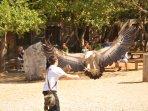 spectacle au rocher des aigles à Rocamadour à 20 min