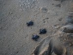 Release turtles