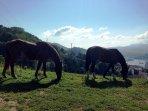 4 bedroom Villa in Zamatete, Basque Country, Spain : ref 5559845