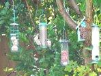Our garden bird life