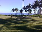Walk a short distance to one of 2 ocean front parks. Cliff, no water entry