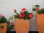 Potted plants around property.