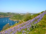 The Cottages in bluebell season (Apri/May)