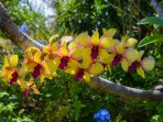 Beautiful tropical flowers and fruits in the yard