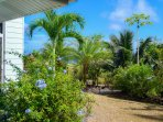 Gardens feature palms, papayas, plumbago and so much more