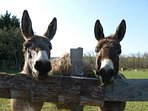 Samson and Delilah - our donkeys