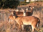 See deer feet from your doorstep (the upper right building is your villa)!