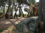 Particolare della pineta di Villa Asfodeli
